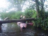 kajakarstwo zwałkowe, spływ Mienią